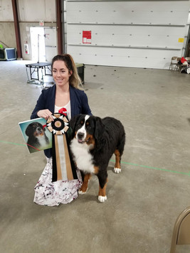 Lizzy - Most Promising Puppy in Seiger Show at the Bernese Mountain Dog Specialty 2018