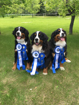 Shelby, Vito, Chiara - Rally Trial wins