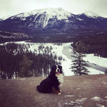 Vito hiking in Jasper