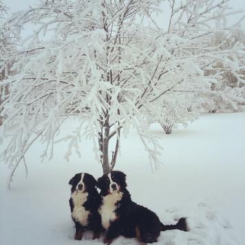 Yardena and Vito in a winter wonderland
