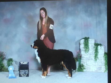 Lizzy - Best Puppy in group (Saskatoon)