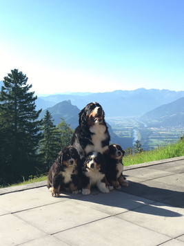 Grischa and two of her puppies