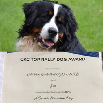 Vito - Number one Bernese Mountain Dog in Rally Obedience in Canada 2017