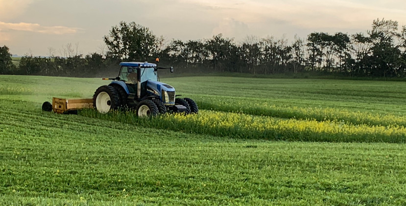 cover crop mowing