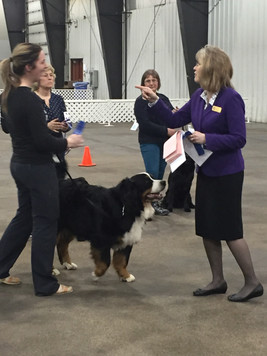 Vito recieving his first Rally Obedience Novice qualifying score and the judge pointing at me for making a silly mistake