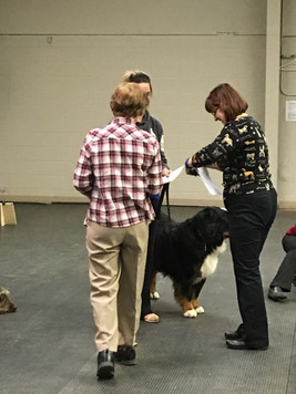 Vito at his CGN test (Canine Good Neighbor)