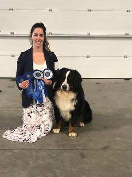 Vito - Rally Obedience: High in class and Obedience, High in Class at the Bernse Mountain Dog Specialty