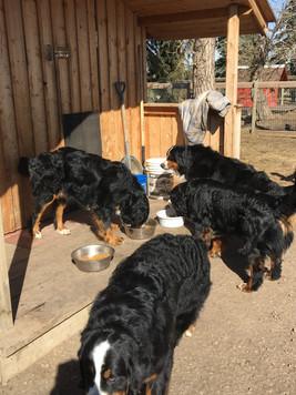 Group feeding training
