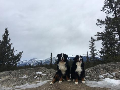 Yardena and Vito hike in Jasper