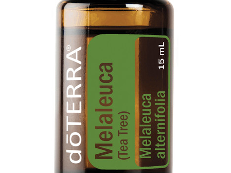Usos y Beneficios de la Melaleuca doTERRA o Árbol de Té