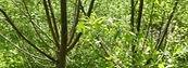 Medcinal%20forest%20garden%20trust_edite