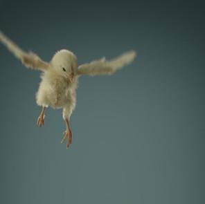 Scoprire le nostre ali