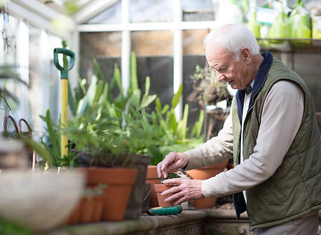 Plantando uma planta