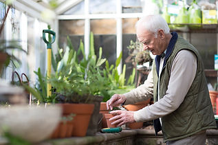 older man planting a plant