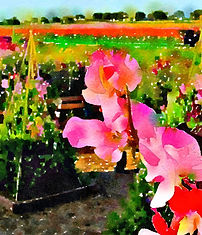 Sweet pea in garden.jpg