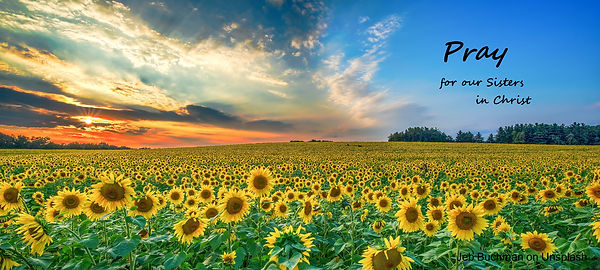 jeb-buchman-sunflowers Pray.jpg
