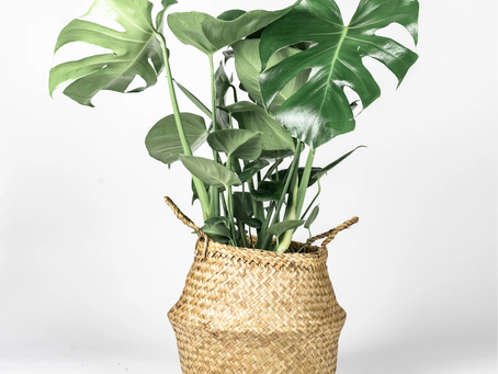 Top 10 Low Maintainance House Plants