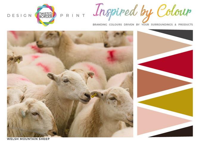 CI Sheep.jpg