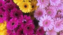 Bouquet de Germinis 2€