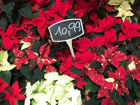 Large choix de Poinsettia à partir de 10€99
