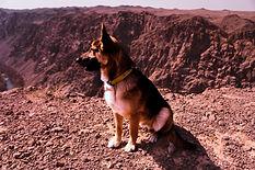 animal-canine-daylight-2071577.jpg