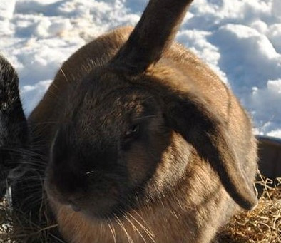 Meet the bunnies with stories to tell