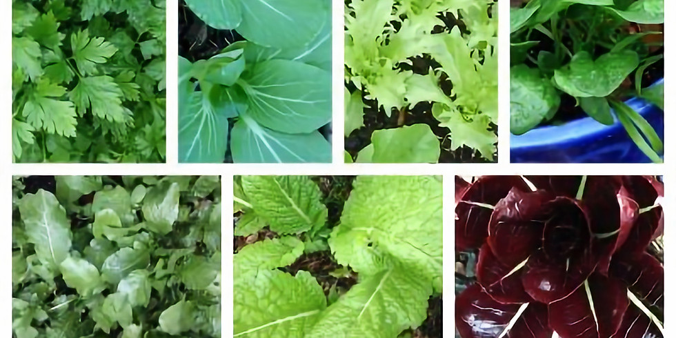 Sow your Summer Salad and Herbs