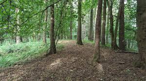 North Wood, Dechmont