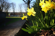 Village planters in the spring