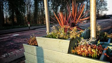 Dechmont planters, spring 2019