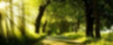 trees healing.jpg