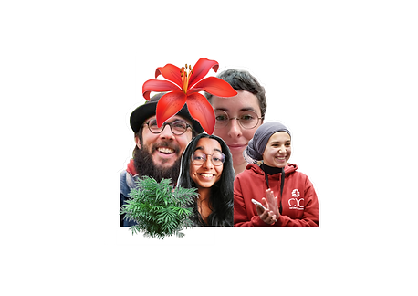 flower_heads.png