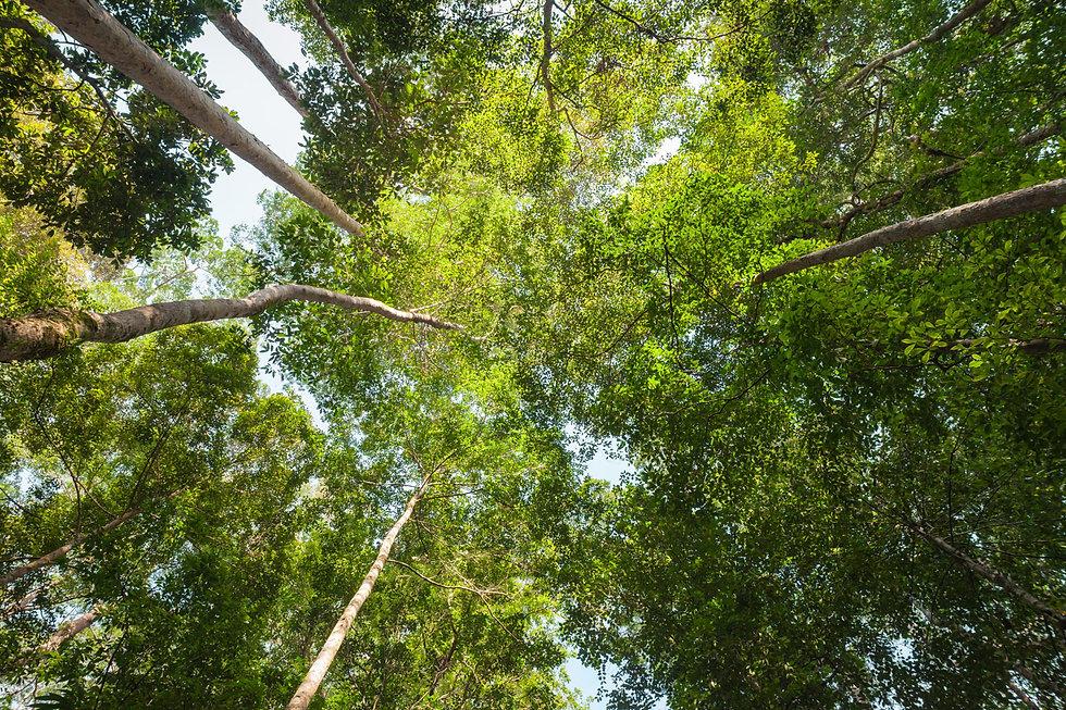 jungle-canopy-3.jpg