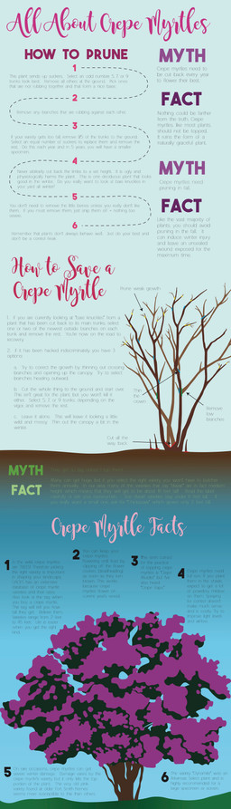 All About Crepe Myrtles Final_.jpg