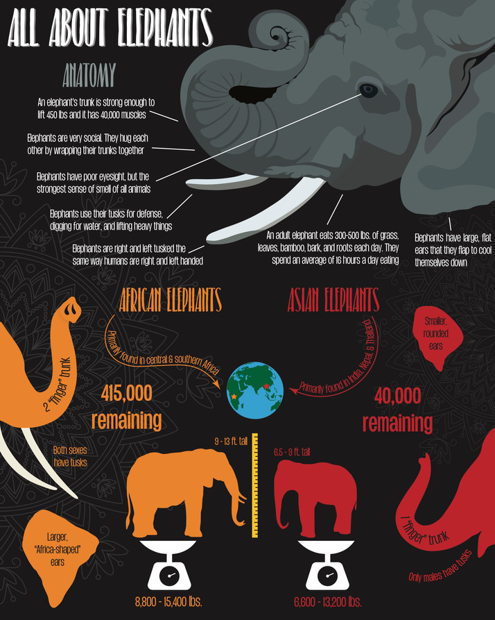 Elephante Final Draft .jpg