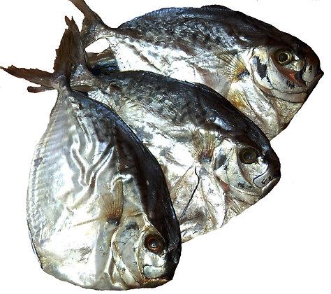 арт.1013. Рыба-луна