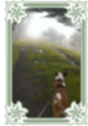 vertical_dogwalking01.png
