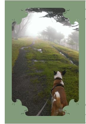 vertical_dogwalking01.png