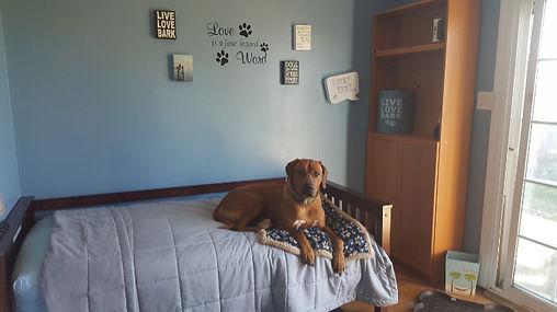 DoggieDaycare_small.jpg