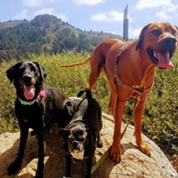 Audrey, Rocco & Dubs