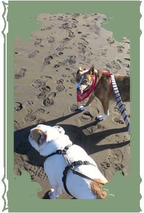 vertical_dogwalking02.png