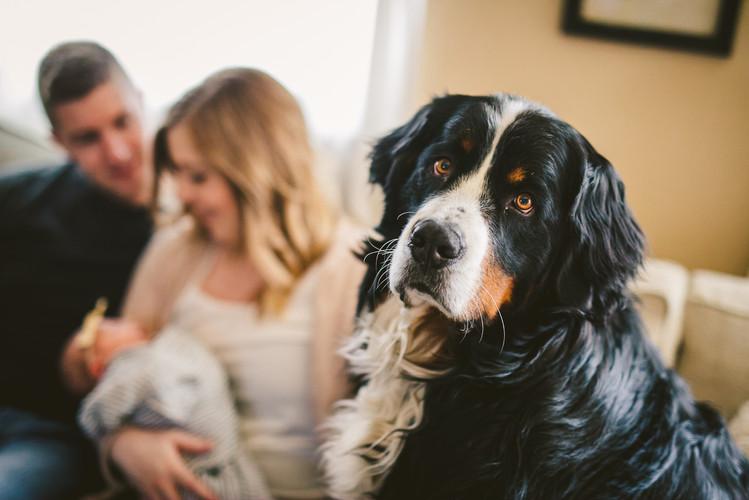 Family Dog 40 Watt Photo