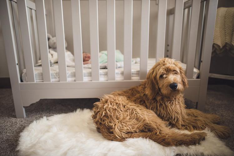 Newborn + Fur Baby Photo 40 Watt Photo