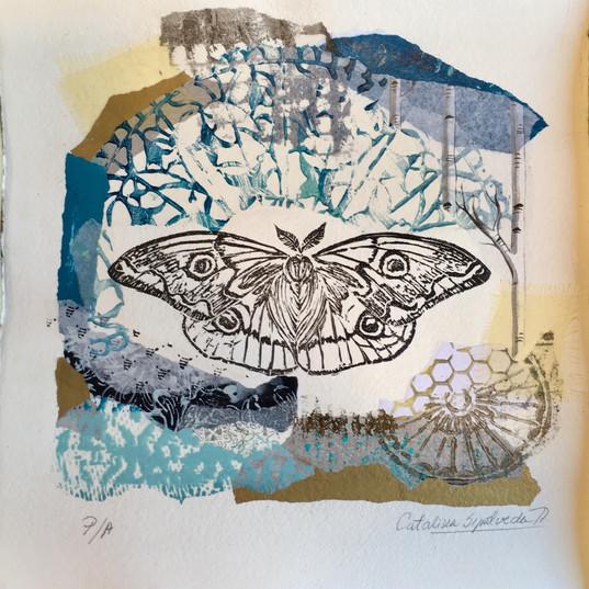 Mariposa 4 ojos