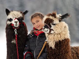 mit meinen Lama Freunden