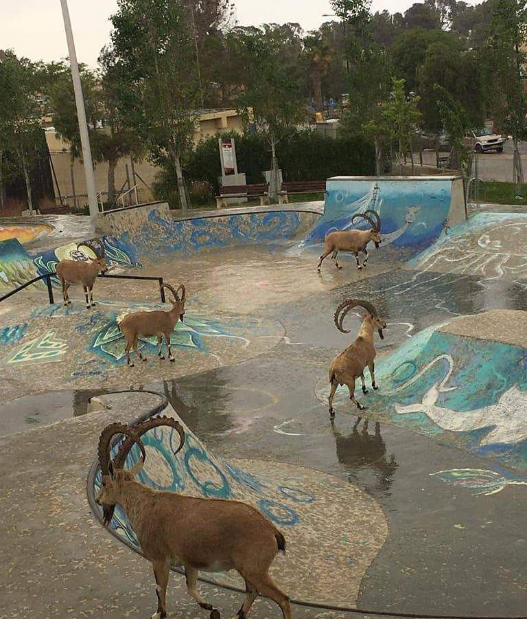 our Company Israel Culinary Tours of Israel Private Tour Guide of Israel Personalized Israel Experiences Bar or Bat Mitzvah Trip to Israel Ibex in Israel Negev Desert Mitzpeh Ramon skate park