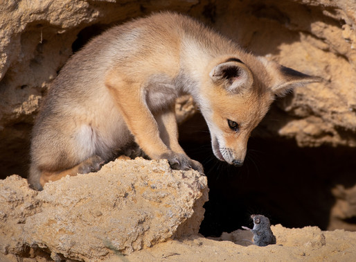 Incredible Photos from an Israeli Wildlife Photographer