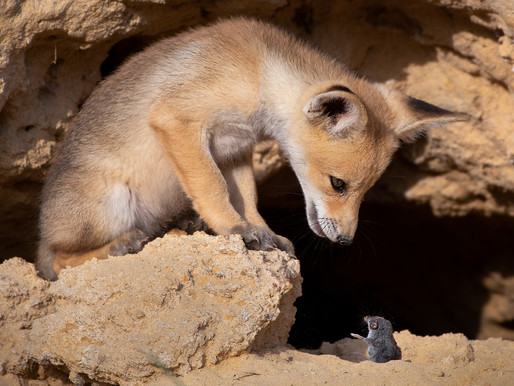 Incredible Photos from an Israeli Wildlife Photographer