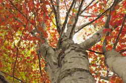 Fall at The Haft