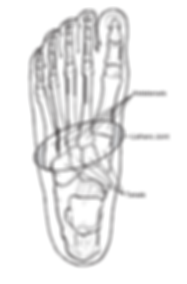 lisfranc_joint.PNG